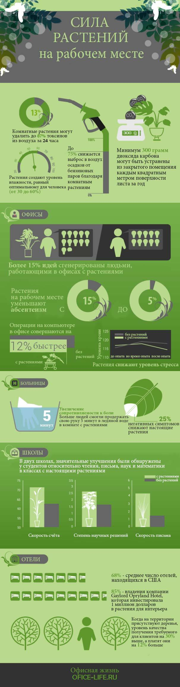 Сила растений на рабочем месте